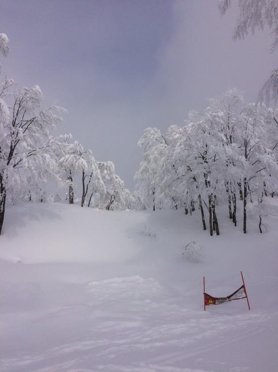 束の間の太陽|六日町八海山スキー場のクチコミ画像
