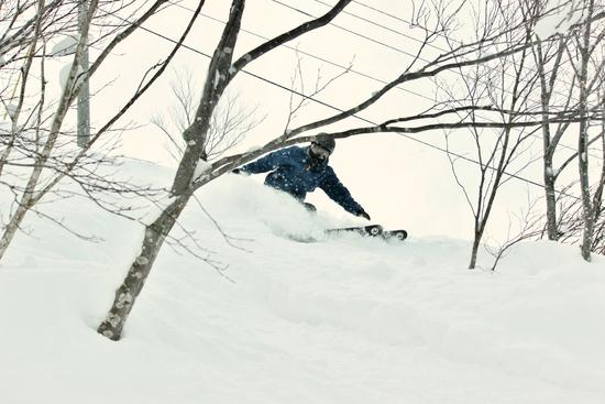 パウダーを全身で|白馬八方尾根スキー場のクチコミ画像3