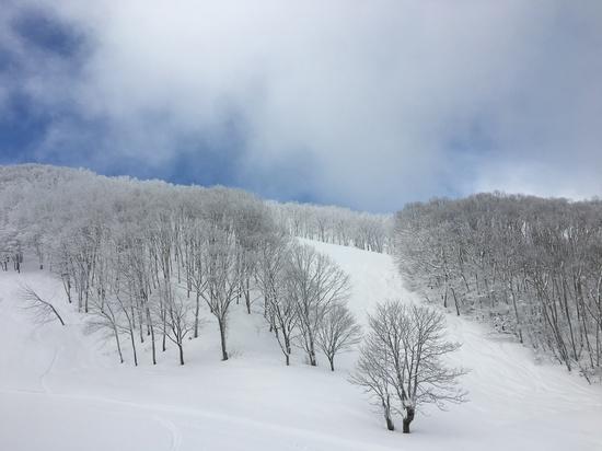 極上パウダー|タングラムスキーサーカスのクチコミ画像2