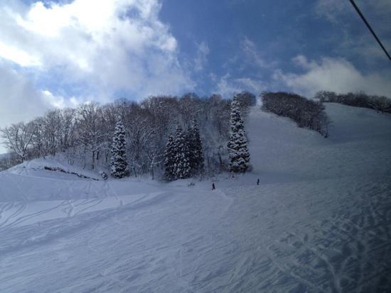 パウダー三昧、最高の雪質!