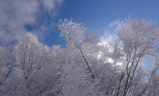 暖冬なんのその|菅平高原スノーリゾートのクチコミ画像