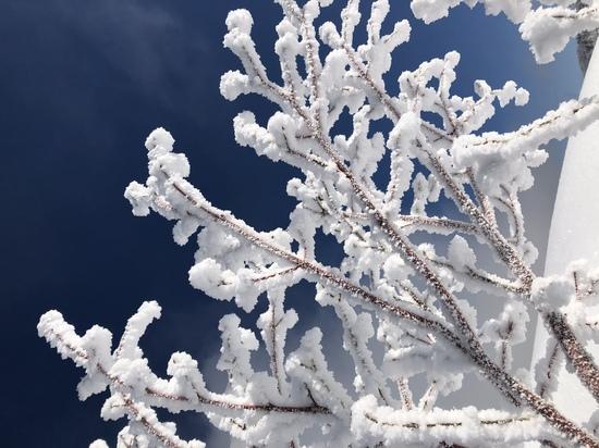 長野の中でも雪質上位!!|竜王スキーパークのクチコミ画像1