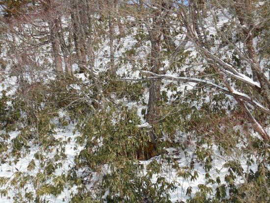 雪がまだ少ないです|高鷲スノーパークのクチコミ画像