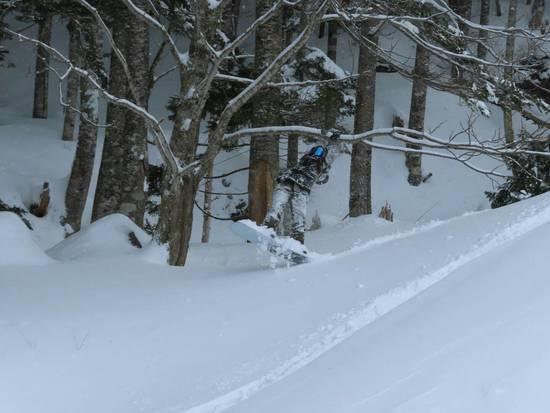 雪に埋もれそうで、思わず必死に木に助けを求めた一瞬|丸沼高原スキー場のクチコミ画像