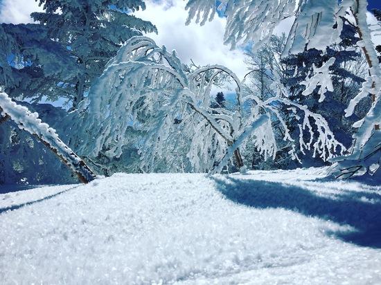 最高過ぎる絶景!!|パルコールつま恋スキーリゾートのクチコミ画像2