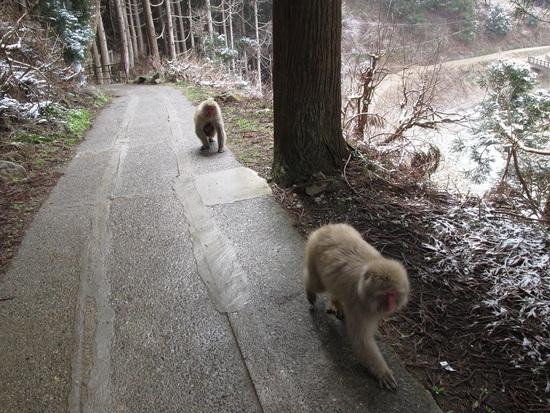 冬に逆戻り?地獄谷野猿公苑 志賀高原 熊の湯スキー場のクチコミ画像2