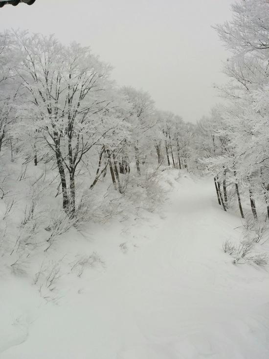 パラダイス天国|六日町八海山スキー場のクチコミ画像