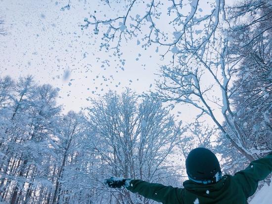 いつもは公式ツリーランのゲレンデ 斑尾高原スキー場のクチコミ画像2