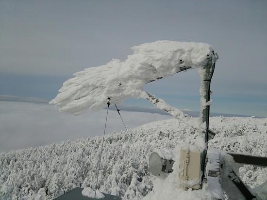 1/8 スノーモンスターできてるよ!!|蔵王温泉スキー場のクチコミ画像