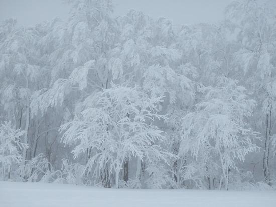 蔵王|蔵王温泉スキー場のクチコミ画像