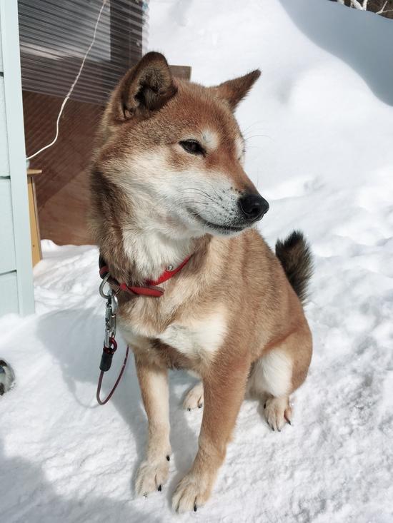 はな雪|菅平高原スノーリゾートのクチコミ画像