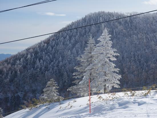 極上パウダー片栗粉 草津温泉スキー場のクチコミ画像