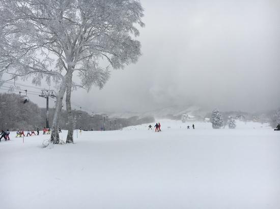大雪 野沢温泉スキー場のクチコミ画像