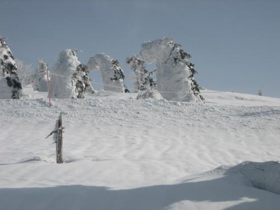 シーズン終盤でしたが|阿仁スキー場のクチコミ画像