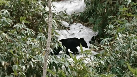 熊出没注意|志賀高原 熊の湯スキー場のクチコミ画像