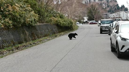 熊出没注意|志賀高原 熊の湯スキー場のクチコミ画像2