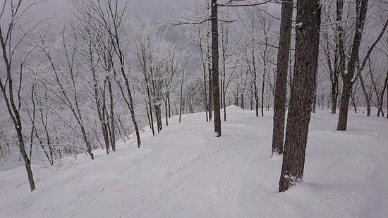 ローカルでのんびりしたスキー場|白馬岩岳スノーフィールドのクチコミ画像3