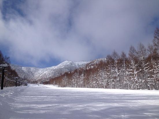 雪質サイコーでした|奥志賀高原スキー場のクチコミ画像