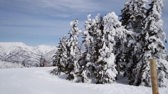 思ったほど広くなく、、、|苗場スキー場のクチコミ画像