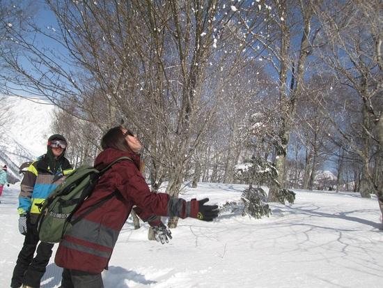 3月4日、白馬岩岳Part.3|白馬岩岳スノーフィールドのクチコミ画像