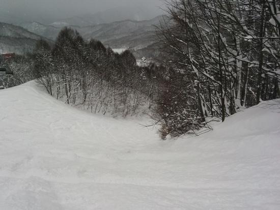 パウダー三昧だったけど、雪は重め|水上宝台樹スキー場のクチコミ画像