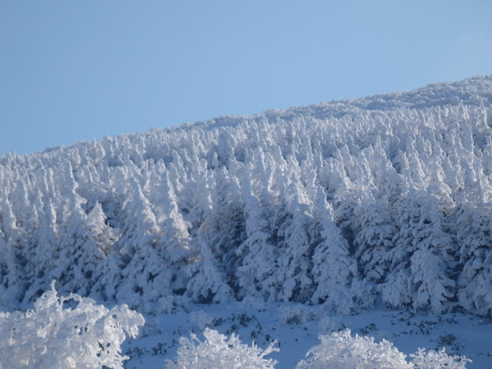 樹氷がきれい|箕輪スキー場のクチコミ画像3