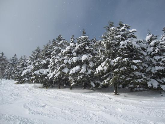 雪、たっぷり!|パルコールつま恋スキーリゾートのクチコミ画像2