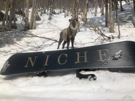 こわ!!|水上宝台樹スキー場のクチコミ画像