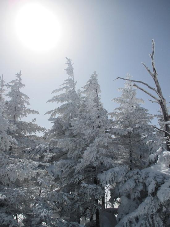 山頂からのロングコースが気持ちいいです。 草津温泉スキー場のクチコミ画像