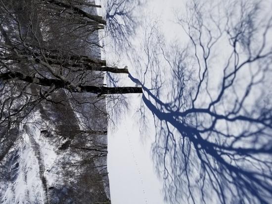 絶景!!|かぐらスキー場のクチコミ画像