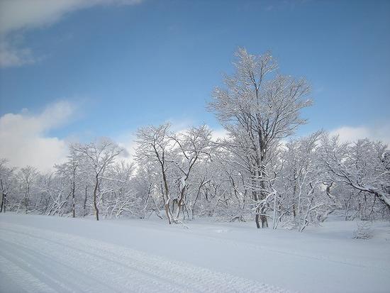 全面滑走|スキージャム勝山のクチコミ画像