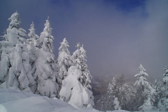 パン屋さん。 志賀高原 熊の湯スキー場のクチコミ画像2