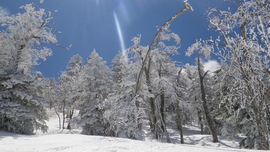 雪たっぷり!|志賀高原リゾート中央エリア(サンバレー〜一の瀬)のクチコミ画像