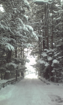 大雪の軽井沢|軽井沢プリンスホテルスキー場のクチコミ画像3
