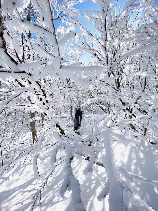 下界は霧、天界は晴れでした!(中央ゲレンデ)|蔵王温泉スキー場のクチコミ画像