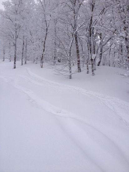 パウダースノー|阿仁スキー場のクチコミ画像