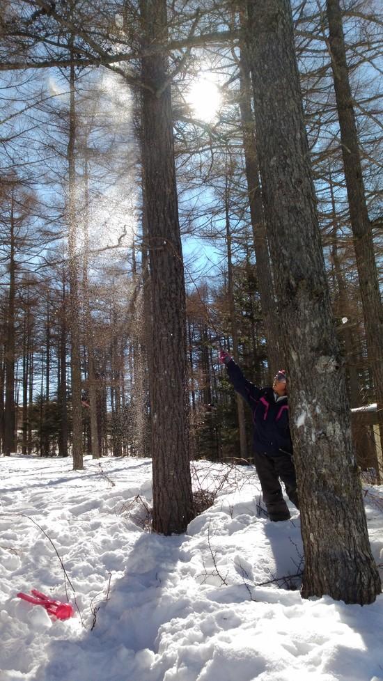 スキーより雪遊び|湯の丸スキー場のクチコミ画像2