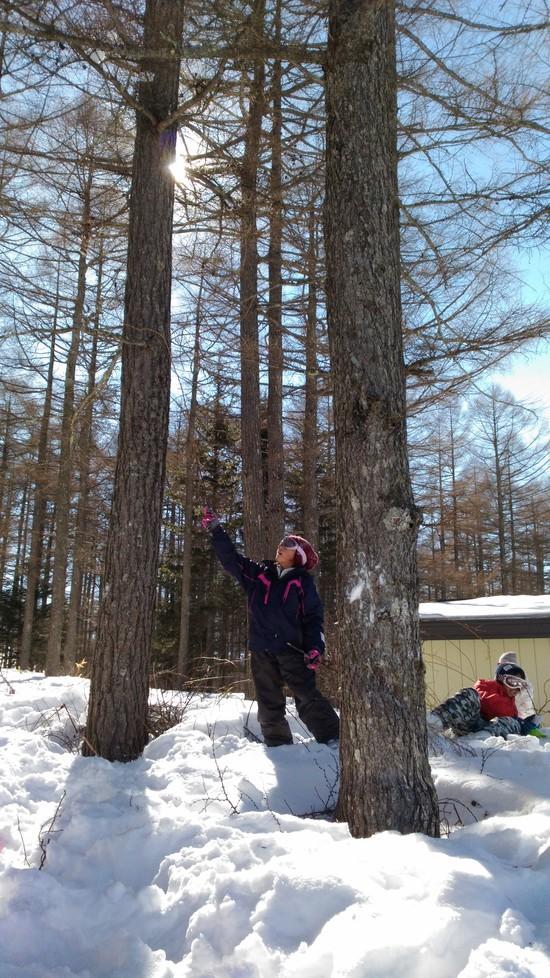 スキーより雪遊び|湯の丸スキー場のクチコミ画像3