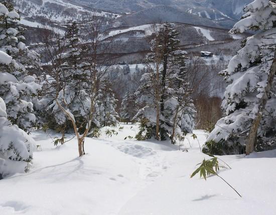 さすが志賀|志賀高原リゾート中央エリア(サンバレー〜一の瀬)のクチコミ画像