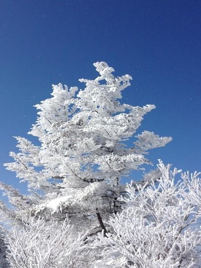 晴天率バッチリです。|万座温泉スキー場のクチコミ画像