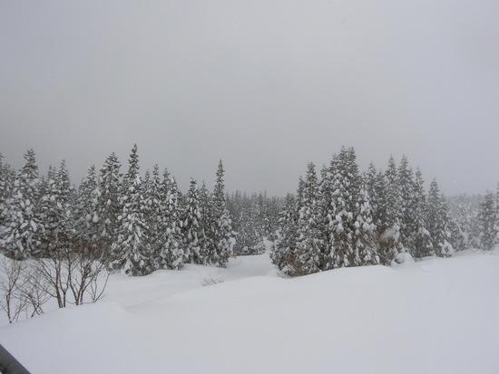 広いゲレンデでスキーを満喫|上越国際スキー場のクチコミ画像