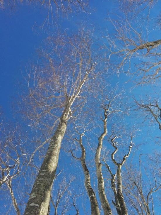 ブナの木コース 気持ちいい! 奥利根スノーパークのクチコミ画像2