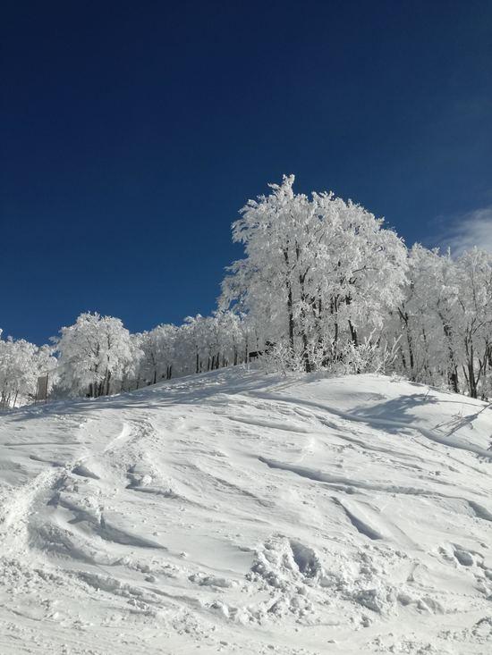 雪が降った朝は行くべきゲレンデ|六日町八海山スキー場のクチコミ画像