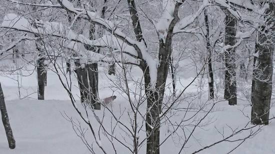 パウダー天国|六日町八海山スキー場のクチコミ画像