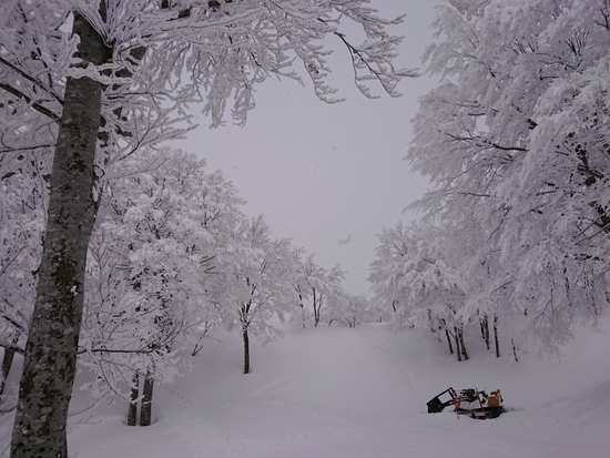 パウダー|六日町八海山スキー場のクチコミ画像