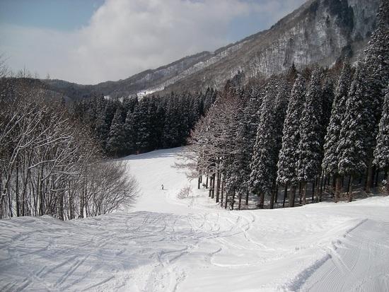 相変わらずボーダーとモーグラーのレベル高し|白馬さのさかスキー場のクチコミ画像