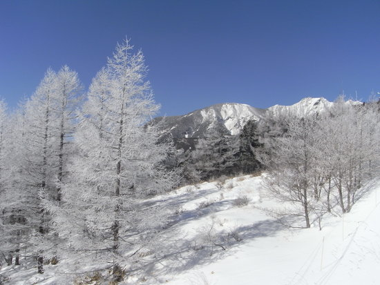 今年はいつも以上に|サンメドウズ清里スキー場のクチコミ画像2