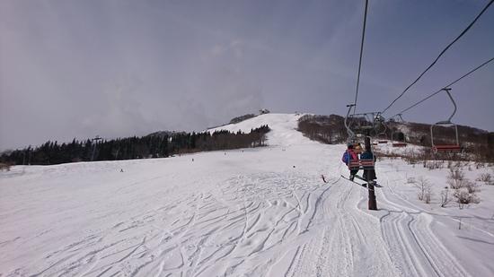 降った後の木に付いた雪は最高にきれい!|岩原スキー場のクチコミ画像