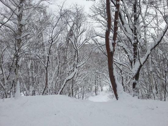 タイミング次第かなー|水上高原・奥利根温泉 藤原スキー場のクチコミ画像