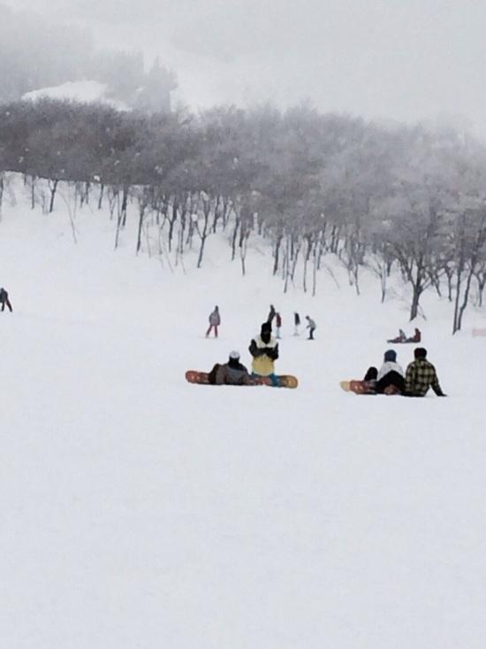 パウダースノー|スキージャム勝山のクチコミ画像